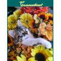 Adorable Kitty Cat Kitten leaning back, Flowers Postcard