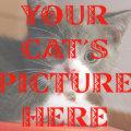 Customized Your Cat's Photo Magnet