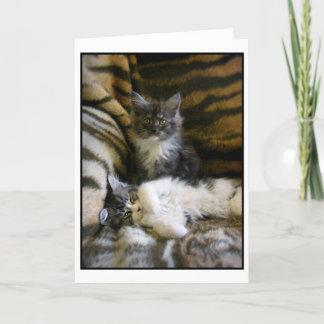 Cute Maine Coon kittens greeting card