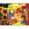 Funny Kitty Cat Kitten Looking Away, Fall Colors Postcard