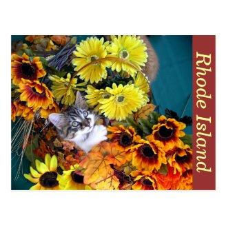 Halloween Kitty Cat Kitten, Thanksgiving Holiday Post Cards