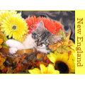 Kitty Cat Kitten leaning, Paws Crossed, Basket Post Card
