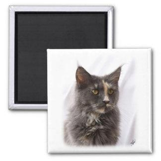 Maine Coon Cat 9Y825D-012 Magnets