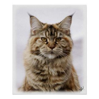 Maine Coon Cat 9Y825D-053 Poster