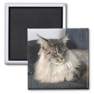 Maine Coon Cat Fridge Magnet