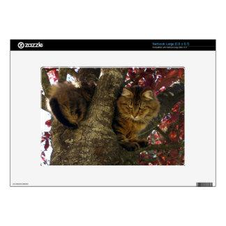 Maine Coon Cat in a Tree for Pet-lovers Netbook Decal