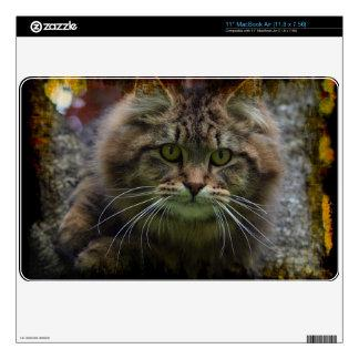 Maine Coon Cat in a Tree Portrait for Pet-lovers Decal For The MacBook Air