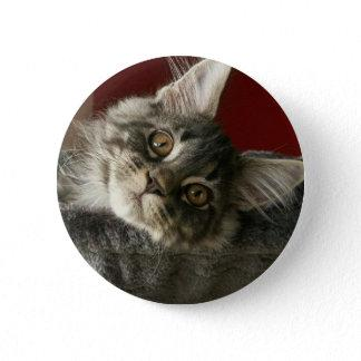 Maine Coon Kitten Badge Pinback Button
