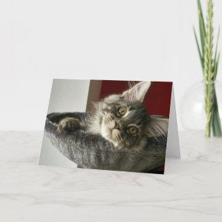 Maine Coon Kitten Birthday Card