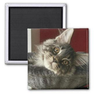 Maine Coon Kitten Fridge Magnet