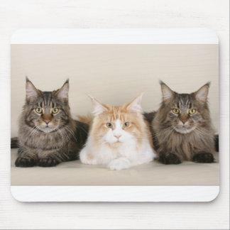3 maine coons mouse pad