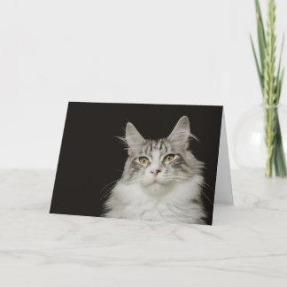 Adult Maine Coon Cat Card