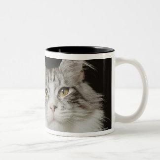 Adult Maine Coon Cat Two-Tone Coffee Mug