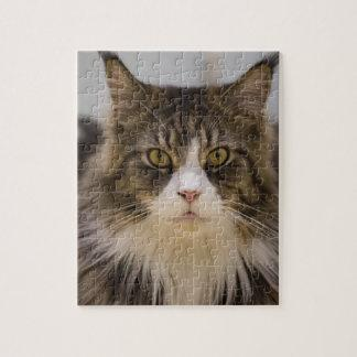 Beautiful maine coon jigsaw puzzle