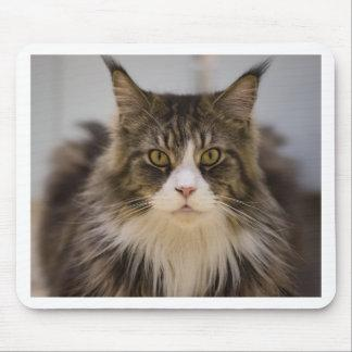 Beautiful maine coon mouse pad