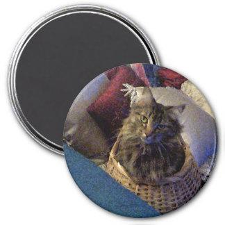 Beautiful Tabby Maine Coon Kitty Cat in a Basket Magnet
