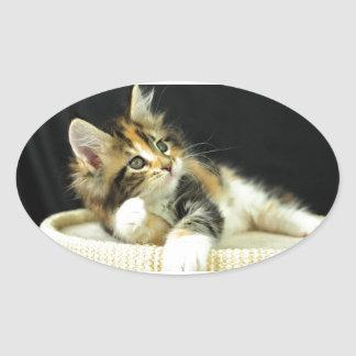 Calico Maine Coon Kitten Plays Oval Sticker