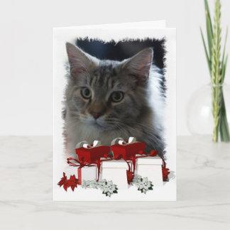 Cat Christmas Card With Maine Coon Kitten