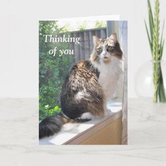 Cat on windowsill card