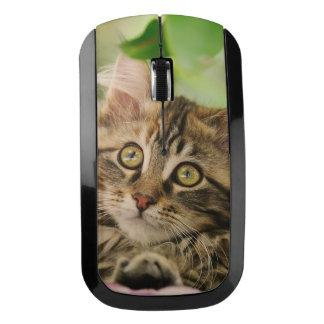 Cute Maine Coon cat kitten Wireless Mouse