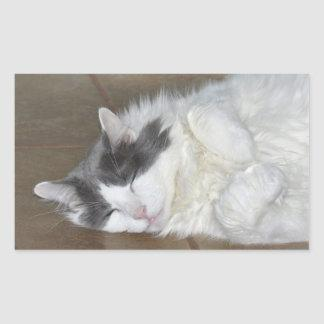 Cute Maine Coon cat Stickers