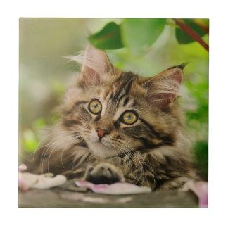Cute Maine Coon kitten Ceramic Tile