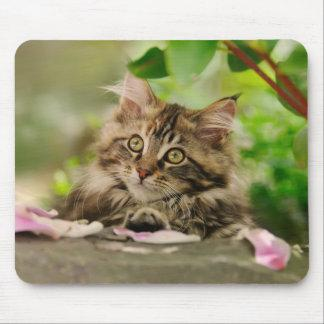 Cute Maine Coon kitten Mouse Pad