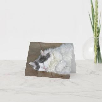 Cute resting Maine Coon cat Notecard