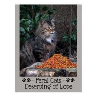 Feral Cats Deserving of Love Postcard