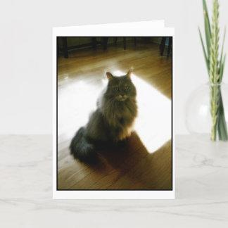Fluffy cat in sunshine greeting card