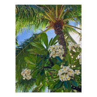 Frangipani and Coconut Palm Poster
