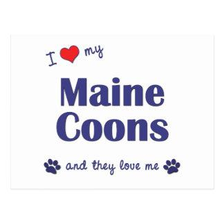 I Love My Maine Coons (Multiple Cats) Postcard