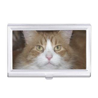 Jack domestic orange and white maine coon cat case for business cards