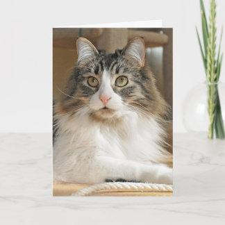Long-haired cat Birthday or All Occasion card