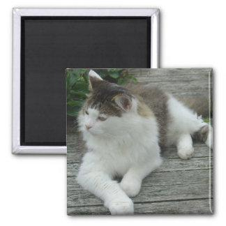 Magnet - Maine Coon Cat  Image 1
