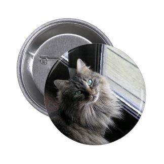 Main Coon Kitty Cat Button
