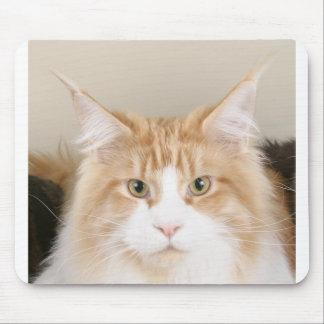 maine coon 3 mouse pad
