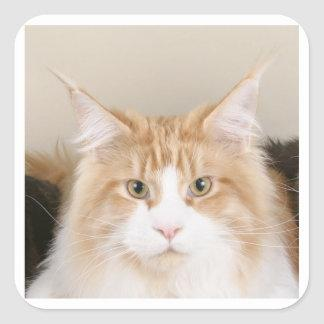 maine coon 3 square sticker