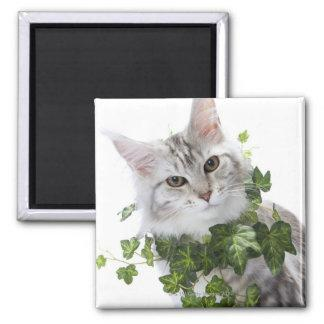 Maine Coon cat and ornament of ivy Magnet