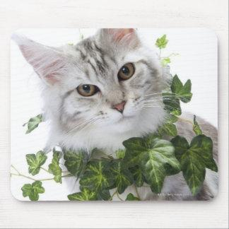 Maine Coon cat and ornament of ivy Mouse Pad
