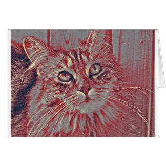Maine Coon cat Card