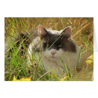Maine Coon Cat Chillin' in the grass