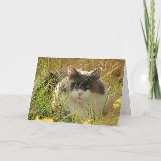 Maine Coon Cat Chillin' in the grass Thank You Card