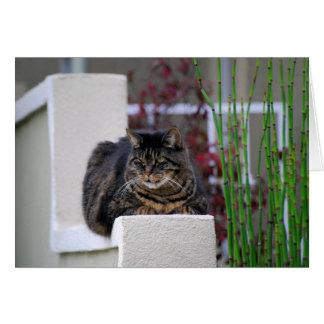 Maine Coon Cat in Garden Greeting Card