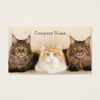 Maine coon cats business cards