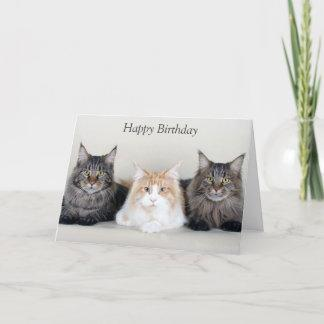 Maine Coon cats cute photo custom birthday card