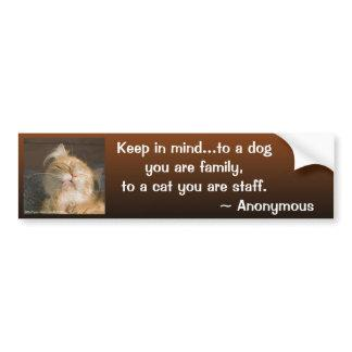 Maine Coon Close Up Photograph Bumper Sticker