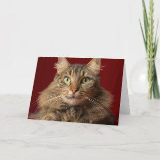 Maine Coon for Christmas with collector Holiday Card