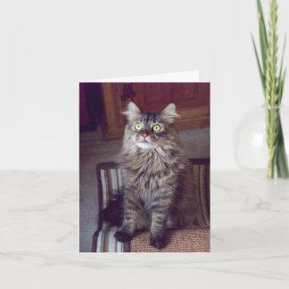 Maine coon Greetings (blank) Card