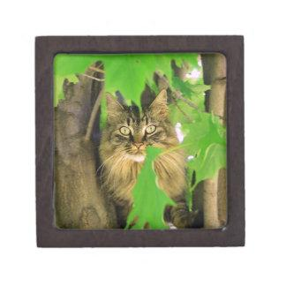 Maine Coon in Tree Keepsake Box